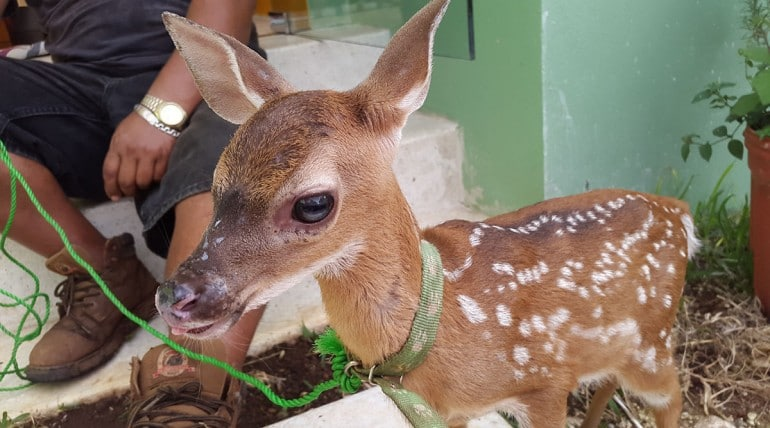 A Baby Deer at our Farm